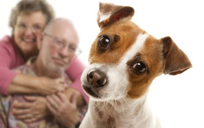5 Amazing Benefits of Pet Therapy for Seniors